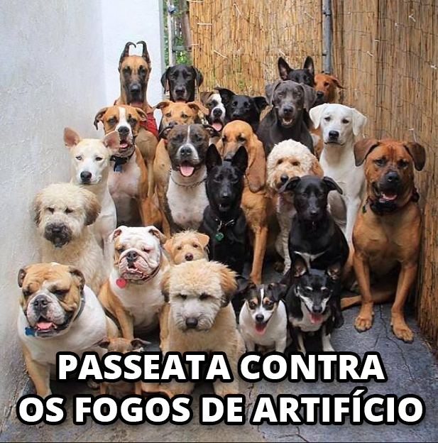 passeata-fogos-artificio-01