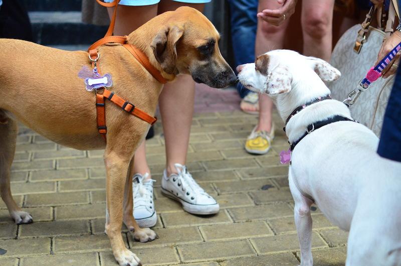 Cachorros se conhecendo na festa da Estopinha. (Foto: Karina Sakita)