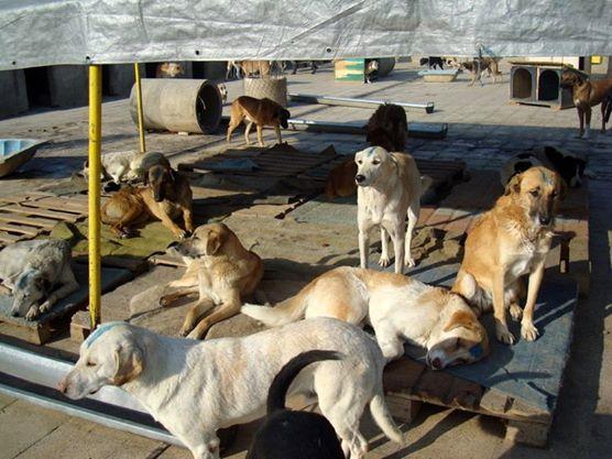 Abrigo de cães no Irã. (Foto: Reprodução / Facebook / Vafa Animal Shelter)