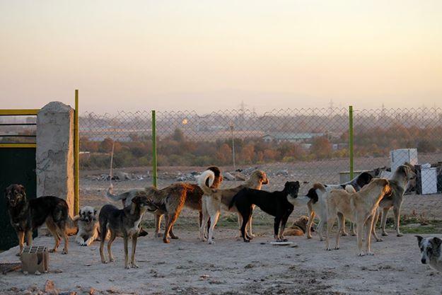 Pelo menos, esses cachorros deixaram de viver nas ruas. (Foto: Reprodução / Facebook / Vafa Animal Shelter)