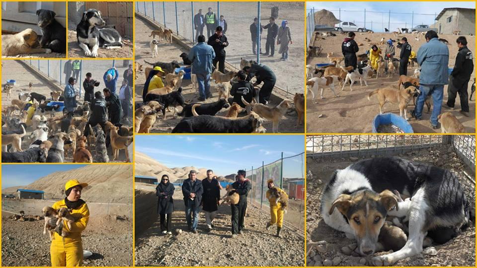 O Vafa Animal Shelter enfrenta muitas dificuldades. (Foto: Reprodução / Facebook / Vafa Animal Shelter)