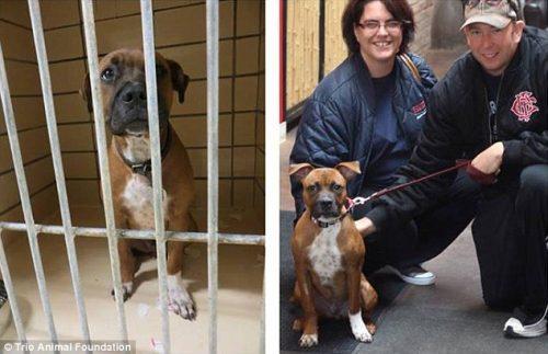 adocao-cachorros-antes-depois-imagens-incriveis-pdd (10)