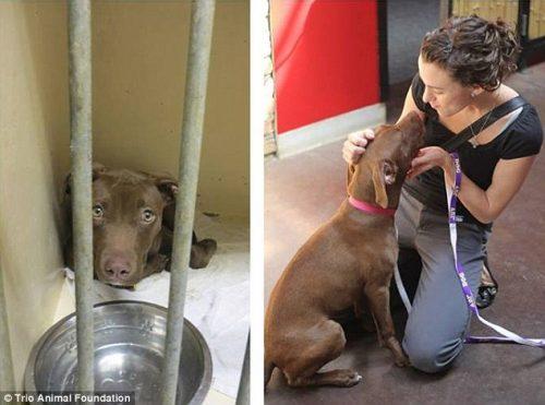 adocao-cachorros-antes-depois-imagens-incriveis-pdd (11)