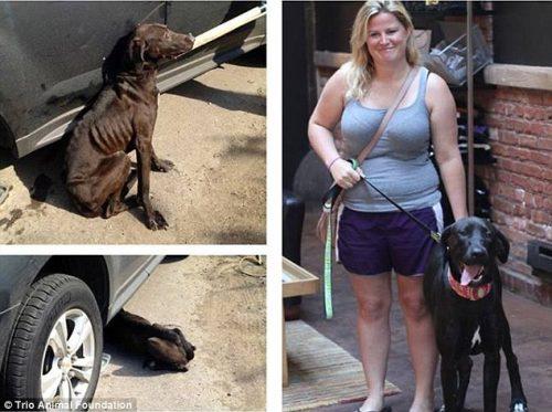 adocao-cachorros-antes-depois-imagens-incriveis-pdd (12)