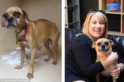 adocao-cachorros-antes-depois-imagens-incriveis-pdd (15)