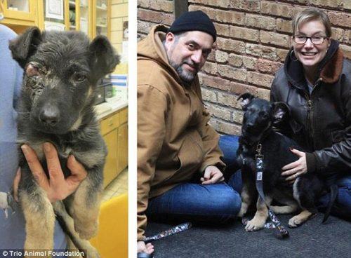 adocao-cachorros-antes-depois-imagens-incriveis-pdd (16)