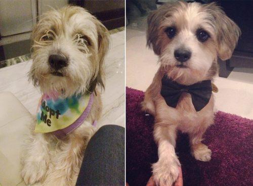 adocao-cachorros-antes-depois-imagens-incriveis-pdd (18)