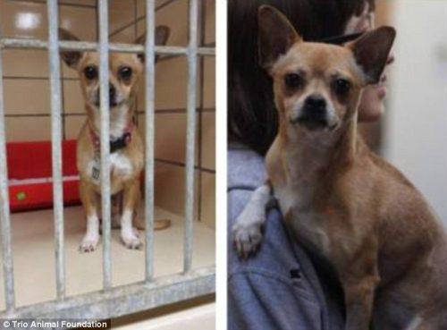adocao-cachorros-antes-depois-imagens-incriveis-pdd (2)