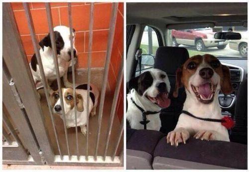 adocao-cachorros-antes-depois-imagens-incriveis-pdd (20)