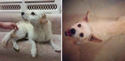 adocao-cachorros-antes-depois-imagens-incriveis-pdd (21)