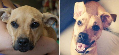 adocao-cachorros-antes-depois-imagens-incriveis-pdd (22)