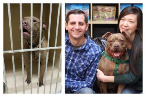 adocao-cachorros-antes-depois-imagens-incriveis-pdd (26)