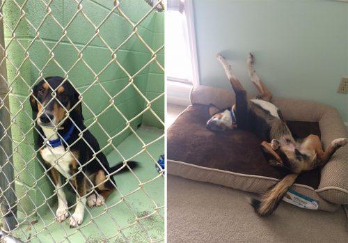 adocao-cachorros-antes-depois-imagens-incriveis-pdd (35)