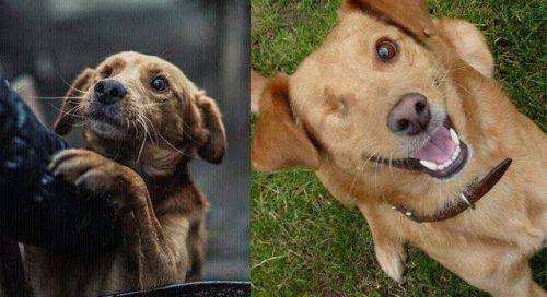 adocao-cachorros-antes-depois-imagens-incriveis-pdd (36)