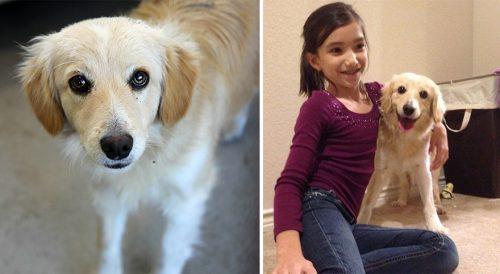 adocao-cachorros-antes-depois-imagens-incriveis-pdd (37)