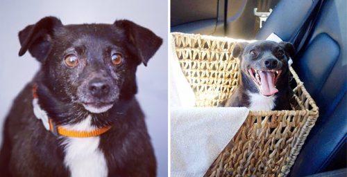 adocao-cachorros-antes-depois-imagens-incriveis-pdd (39)