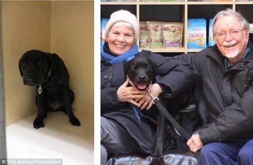 adocao-cachorros-antes-depois-imagens-incriveis-pdd (4)