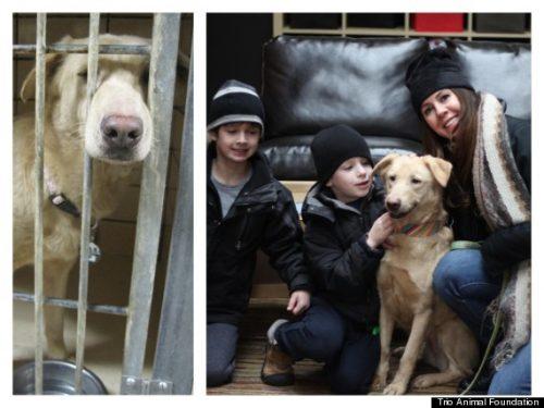 adocao-cachorros-antes-depois-imagens-incriveis-pdd (41)