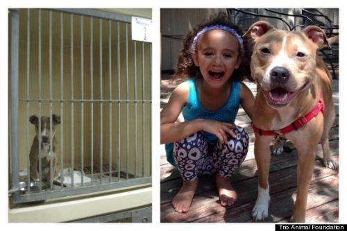 adocao-cachorros-antes-depois-imagens-incriveis-pdd (42)
