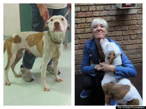 adocao-cachorros-antes-depois-imagens-incriveis-pdd (44)