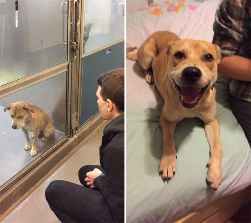adocao-cachorros-antes-depois-imagens-incriveis-pdd (47)