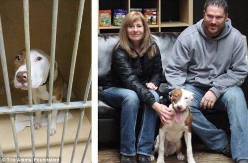 adocao-cachorros-antes-depois-imagens-incriveis-pdd (6)