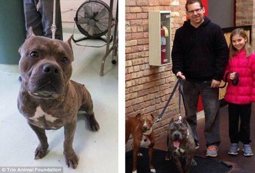 adocao-cachorros-antes-depois-imagens-incriveis-pdd (7)