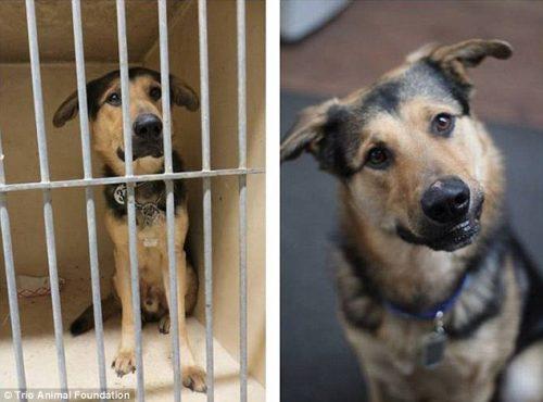 adocao-cachorros-antes-depois-imagens-incriveis-pdd (9)