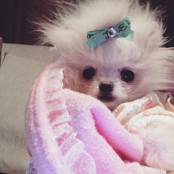 A cachorrinha que Paris deu para sua mãe. (Foto: Reprodução / Instagram)