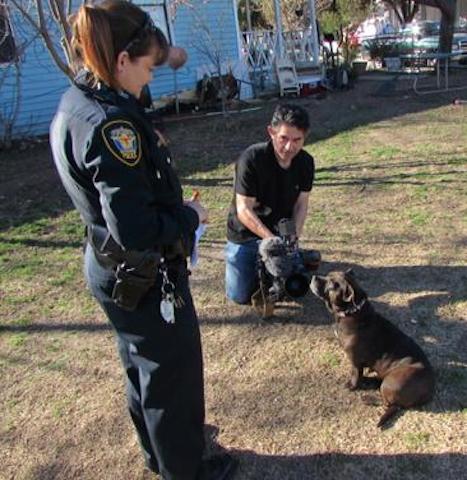 A cachorra ganhou destaque na imprensa. (Foto: Reprodução / Twitter / Fort Worth Police)