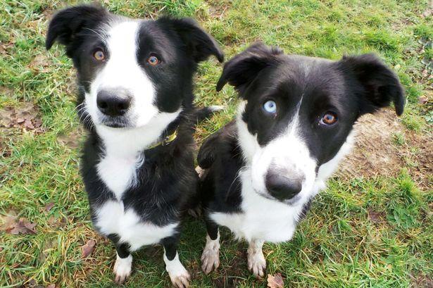 As irmãs Holly (esquerda) e Molly (direita). (Foto: Reprodução / Metro UK)