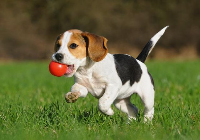 Não esqueça de brincar com seu cachorro! (Foto: Reprodução / Google)