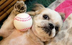 O cão não quer brincar e agora? (Foto: Reprodução / Google)