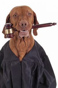 O que fazer em casos de problemas com a permanência do seu cão no condomínio. Foto: Reprodução