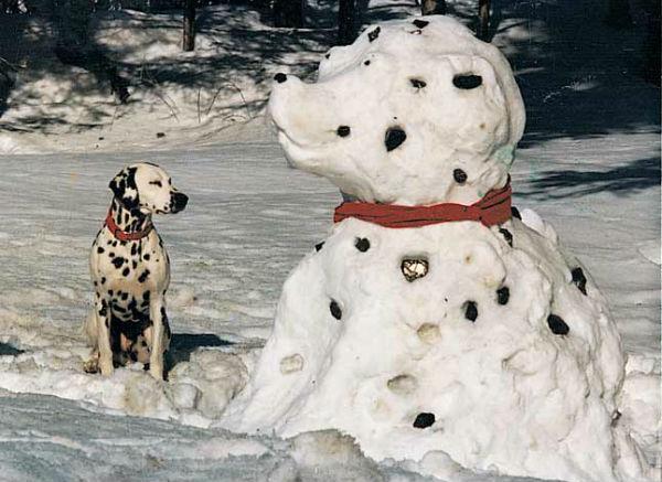 cachorro-neve-01