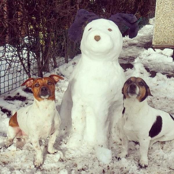 cachorro-neve-03
