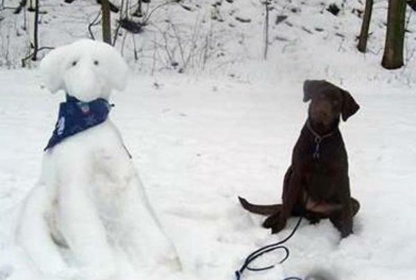 cachorro-neve-05