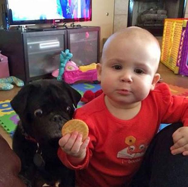 cachorro-olhando-fixo-biscoito-crianca