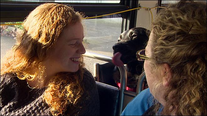 A cachorra se sente bem a vontade no ônibus. (Foto: Reprodução / Komo News)