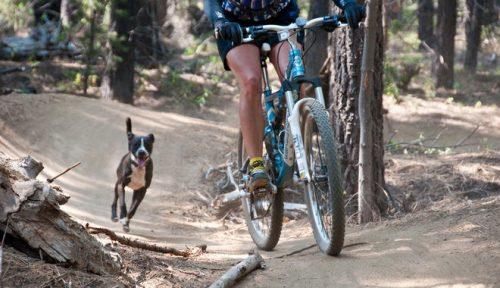 Cachorro correndo atrás de bicicleta. (Foto: Reprodução / Google)