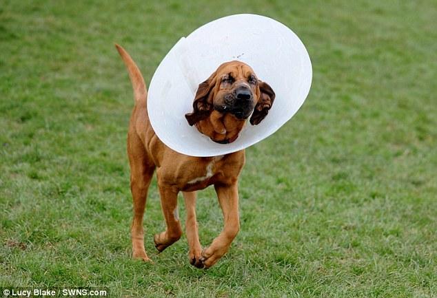 O cachorro Rock precisou de uma cirurgia para não perder a visão. (Foto: Reprodução / Daily Mail UK)