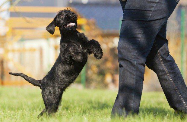Como chamar um cachorro para brincar? (Foto: Reprodução / Google)