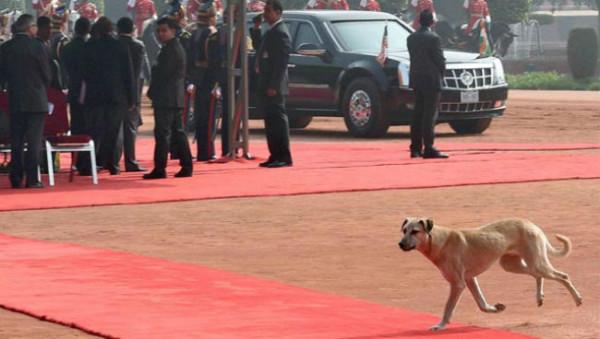 O cachorro ganhou destaque na imprensa mundial. (Foto: Reprodução / Hindustan Times)