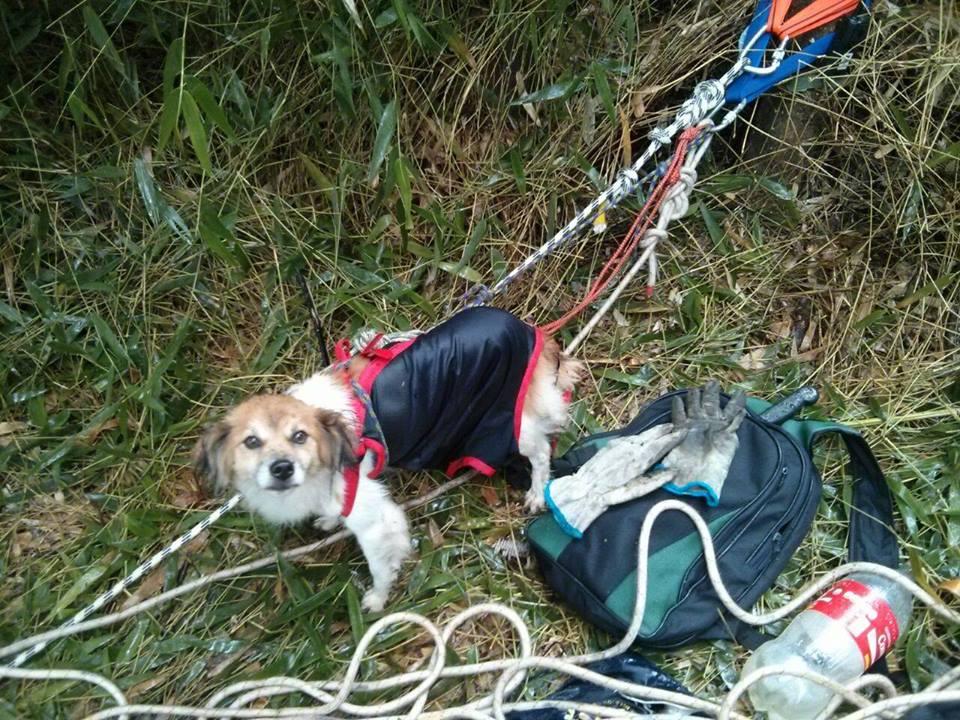 O cão foi resgatado com segurança.