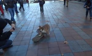O cão Sam andando de skate no meio dos manifestantes. (Foto: Reprodução / Youtube)
