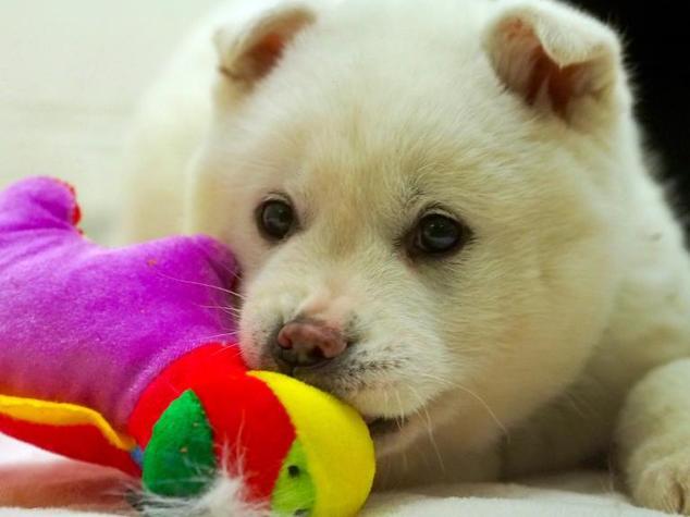 O filhote Snowball foi resgatado e agora terá a chance de ser adotado. (Foto: Reprodução / Daily Mail UK)