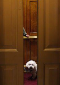 Cachorros em apartamentos. Foto: Reprodução