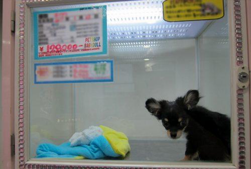 Animais não poderão mais ser expostos em vitrines ou gaiolas em Pet Shops. Foto: Reprodução