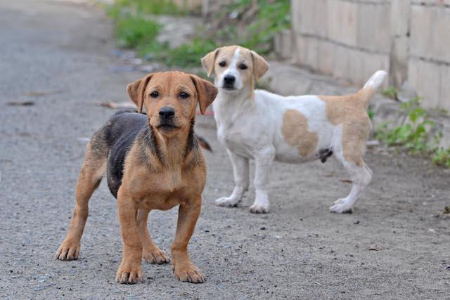 Cachorros de rua serão castrados. (Foto: Reprodução / Google)
