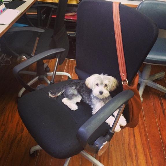 Deixando o ambiente de trabalho mais descontraído. (Foto: Reprodução / Instagram)